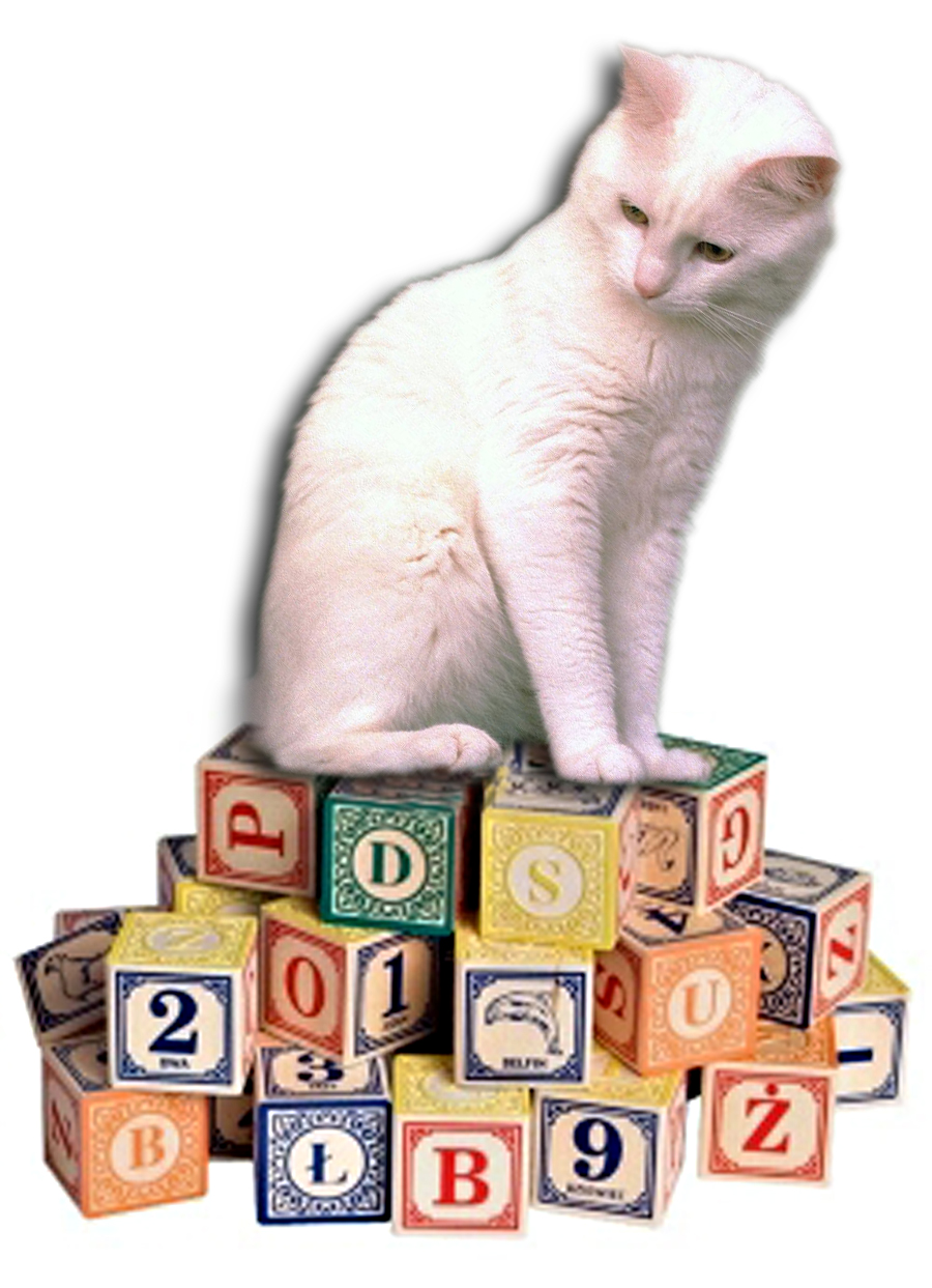 Cat With Blocks