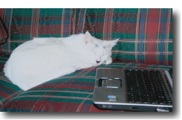 Cat with computer